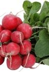 Польза и вред редиса: что нужно знать об этом овоще