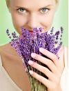 Целебные свойства лаванды - не только приятный аромат