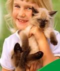 аллергия на животных лечение