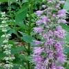 Лекарственные травы - не попадите на крючок шарлатанов