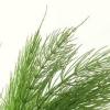 Полевой хвощ для волос – укрепляет корни, избавляет от себореи