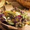 Желчегонные травы – эффективное средство при правильном применении
