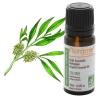 Масло чайного дерева - сильнейший антисептик